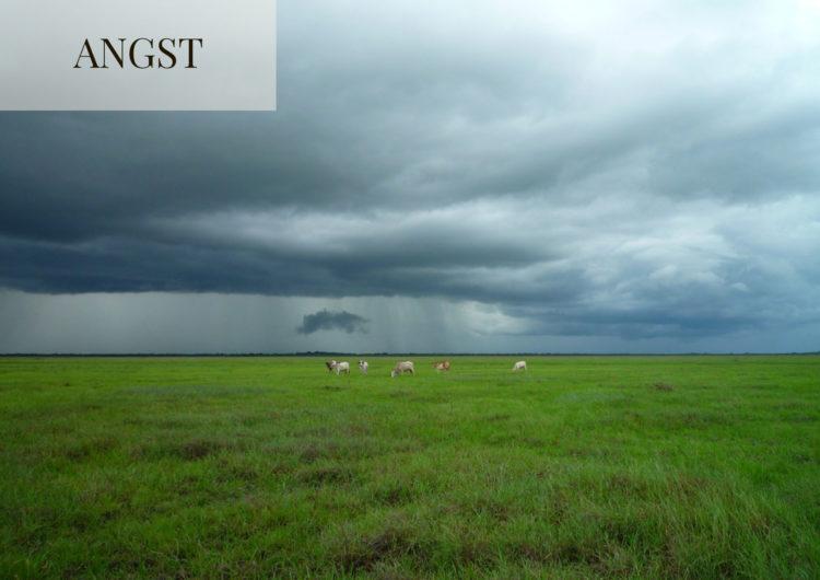 Rinder auf Wiese vor Wolkenbehangenem Himmel